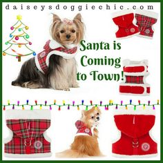 Guess who's coming to town-- Dogs Love Santa Hoodie Harness – for Holiday Season 25 Days Of Christmas Ships Worldwide