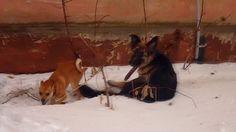 Собачий переполох