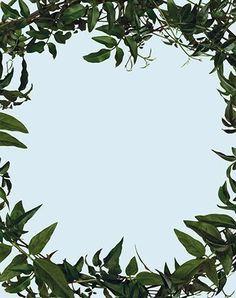 Sarah Charlesworth, 'Leaf Frame,' 2002, Maccarone 40 × 31 5/8 in 101.6 × 80.3 cm