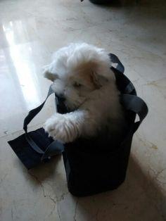 Ender probando su bolsa para la bici