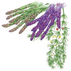 Asparagus - Plant once, harvest for years: A well-maintained bed of this sweet, slender veggie will stay productive for up to 15 years, and, with its vibrant, ferny foliage, asparagus makes an excellent ornamental.