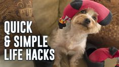 Take a look at these great household Hacks! 5 Quick and Simple Life Hacks: https://www.youtube.com/watch?v=FTOakf_EyXI&utm_source=rss&utm_medium=Sendible&utm_campaign=RSS Looking for Pest Control? Ask for a quote: www.provenpest.net