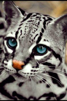 exotic pets