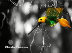 Took this at longwood gardens Longwood Gardens, Photography, Photograph, Fotografie, Photoshoot, Fotografia