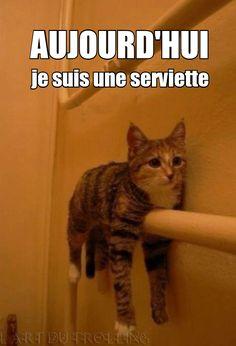 Un serviette chat... Pas sûr de l'utilité lol                                                                                                                                                                                 Plus