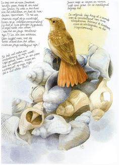 *Nature Diary by Marjolein Bastin!