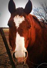 valentine box horse