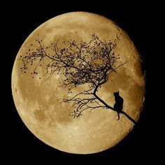 moon rising pictures | THE GATHERING STORM Part I Bad Moon Rising – What Am I Missing Here?