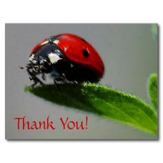 >>>The best place          LadyBug Thank You! Post Cards           LadyBug Thank You! Post Cards In our offer link above you will seeDiscount Deals          LadyBug Thank You! Post Cards today easy to Shops & Purchase Online - transferred directly secure and trusted checkout...Cleck Hot Deals >>> http://www.zazzle.com/ladybug_thank_you_post_cards-239168416393388933?rf=238627982471231924&zbar=1&tc=terrest