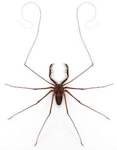 African Cave Dwelling Spider  Ahhhhhhhhhhhhhhhhh!