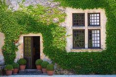 Вьющиеся растения на участке Благодаря плющу вьющемуся и дикому винограду в живую изумрудную изгородь может превратиться обычная сеточная ограда, а дом — в сказочное строение — MEGA-BITVA.RU