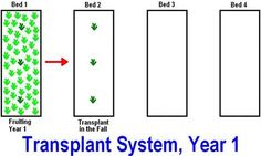 Ever wonder when to transplant strawberry plants? Transplanting strawberries is not too hard. Here is how you should go about transplanting strawberry plants. Strawberry Beds, Strawberry Garden, Strawberry Patch, Strawberry Plants, Fruit Plants, Fruit Garden, Fruit Trees, Vegetable Garden, Gardens