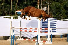 If I touch it, it will eat me. That's a good horse. Over-jumped free jumps make me smile sooo much!
