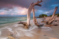 Caribbean Beach Sunset Limited Edition Photo Print Driftwood Ocean Sea Tropical St Kitts and Nevis Travel Photography Fine Art Wall Decor on Etsy, $28.43 CAD
