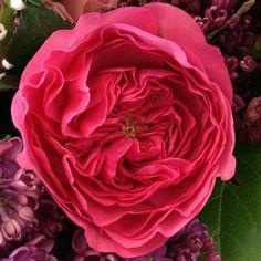 Fresh Flowers, Pretty Flowers, Pink Piano, Wedding Flowers, Studio, Rose, Floral, Garden, Plants