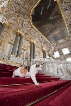 Cats in the Hermitage museum, Saint Petersburg, Russia. They are actually employed there, that's true!!!!  Francesca, proud of her famous namesake, she performs her own version of arias from the eponymous opera in the dead of night from the museum vaults. Anyone who strokes her trichromatic coat gets special treatment.