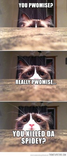 Lol me if I were a cat! :)