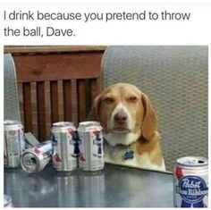 Why dogs drink...