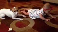 42 Reasons Dogs Will Always Be Better Than Cats