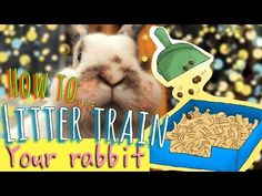 How to Litter Train a Rabbit (with Pictures) - wikiHow