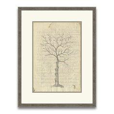 Epic Art Gallery 45061 Fig Tree II Wall Art - Decor Universe