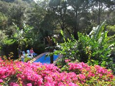 Our yard features native Mexican flowers and  plants, delicious fruit trees, and a beautiful view of the mountains.