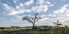 Mpumalanga Drupal, Season 4, South Africa, Moose Art, Beautiful