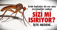 Sivrisinekler meğerse..