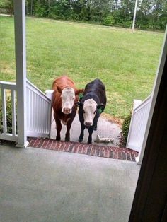 Can Bessie come out and play? Cute cows!