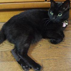 いいね!130件、コメント15件 ― クロチアちゃんさん(@kurochiachiyan)のInstagramアカウント: 「ナデナデもっとしてよ~ #猫 #黒猫 #cat #blackcat」