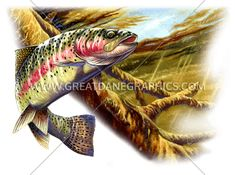 Rainbow Trout | Production Ready Artwork for T-Shirt Printing