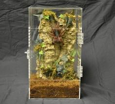 Adult Enclosures - Jamie's Tarantulas