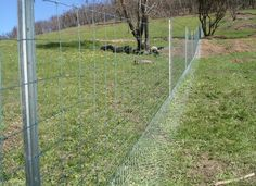 Kangaroos, wild dogs, emus and rabbits can all play havoc with your fences and stock, so here are some feral fencing tips to keep them at bay. Description from waratahfencing.com.au. I searched for this on bing.com/images