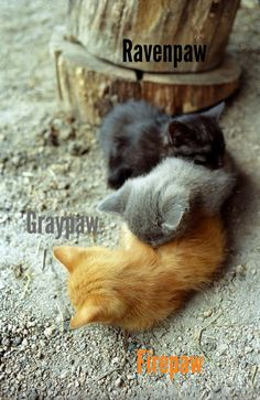 Ravenpaw, Graypaw, Firepaw: Best friends ,but were eventually separated when Ravenpaw had to go to Barley for protection.