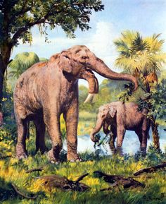 An early species of elephant by Burian, 1973.