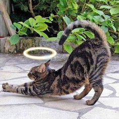 #Micetto le #chat du #Pape pour le #feuilleton #Pachat du #blog #GymYoga http://blog.gym-yoga.fr/micetto-le-chat-du-pape/