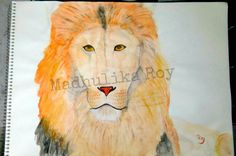 Animal Study II Lion