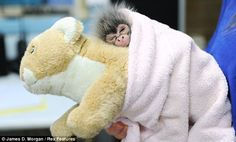 Night time: Estela takes a nap on the back of another cuddly toy