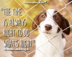 The Animal Rescue Site. Click the purple button to help shelter animals! #MartinLutherKingJrDay  #TheAnimalRescueSite