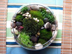 Tabletop moss garden