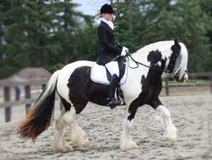 Gypsy Vanner/Irish Cob!!!!  My favorite!  My dream horse!  I still have the Bryer Gypsy horse unopened in the box.