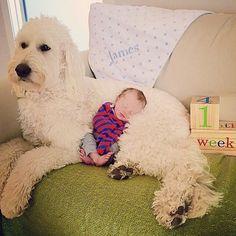 Best Pet Photos on Ellen. James and his golden doodle.