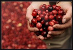 """""""Handful of Cranberries"""" by Phil Cardamone, shown with our Matte Black Basic frame in the medium size.  Discover more at www.imagekind.com!"""