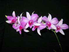um blogue sobre orquideas, aprender de forma dinâmica, sustentável, e divertida e ainda poder conhecer espécies e híbridos do mundo todo!