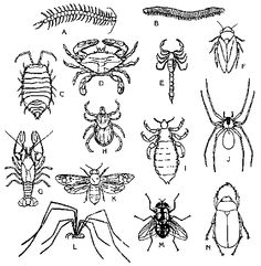 rainforest animals coloring pages - Rainforest Insects Coloring Pages