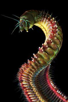 Marine worms by Alexander Semenov l #polychaetes