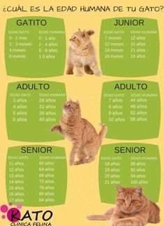 12 Infográficos prácticos que todo amante de los gatos necesita Cute Cats, Funny Cats, I Love Cats, Adorable Kittens, Crazy Cat Lady, Crazy Cats, Animals And Pets, Cute Animals, Cat Behavior