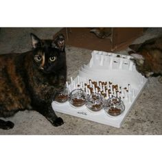 put treats or toys in the maze to give kitty incentive for playing.  Maybe make a maze, too.