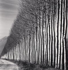 Michael Kenna's photograph of a line of trees (via... — the track east