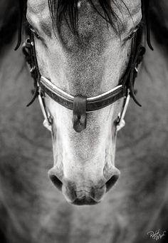 so horses are kinda my thing All The Pretty Horses, Beautiful Horses, Animals Beautiful, Adorable Animals, Horse Photos, Horse Pictures, Horse Ears, All About Horses, Equine Photography